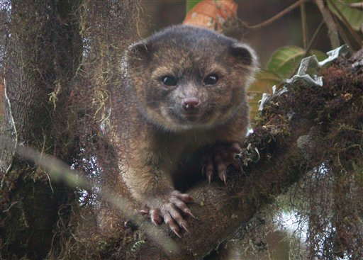 Rare mammal discovered, once lived at zoo