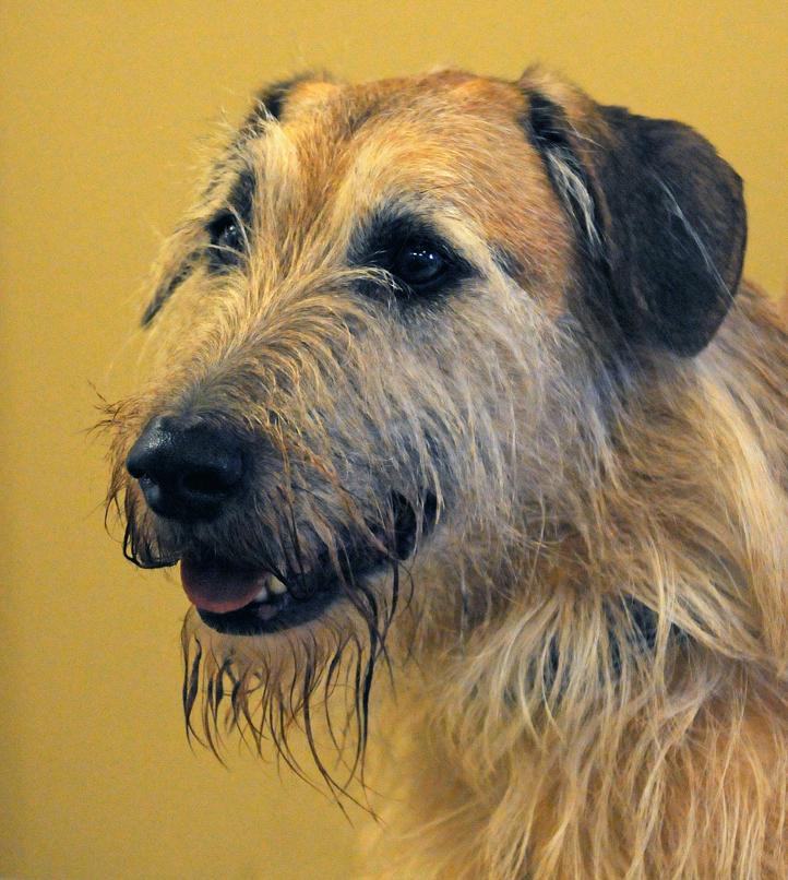Pet of the Week: Patrick, 'Disney dog'