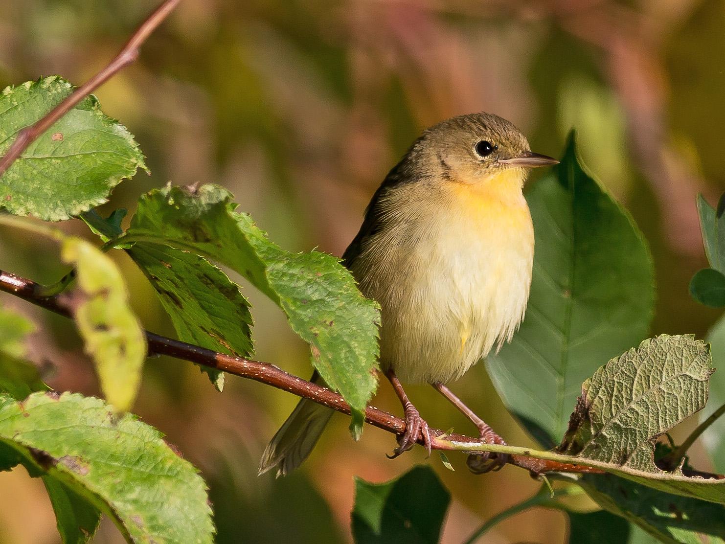 Bird Friendly coffee takes flight in Maryland