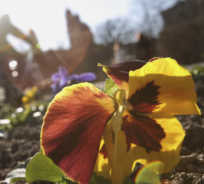 Garden Plot: Did you know fall is a great time to garden?