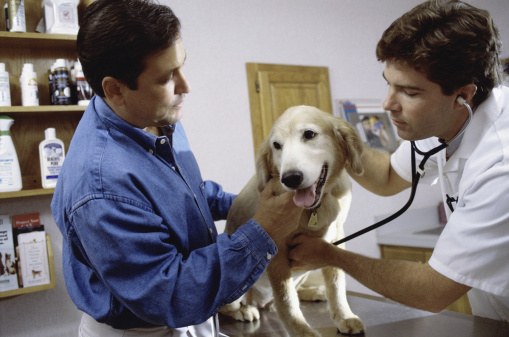 Pet insurance: Are the savings worth the costs?