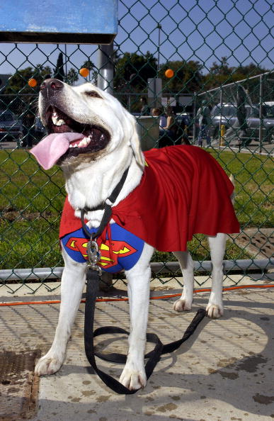 'Howl'oween: Finding a costume and keeping your pet safe on Halloween