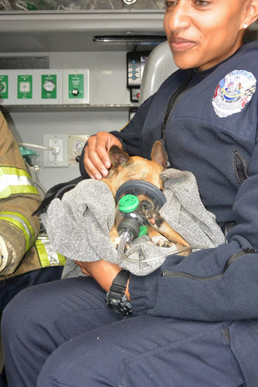 Prince George's firefighters rescue dogs from house fire