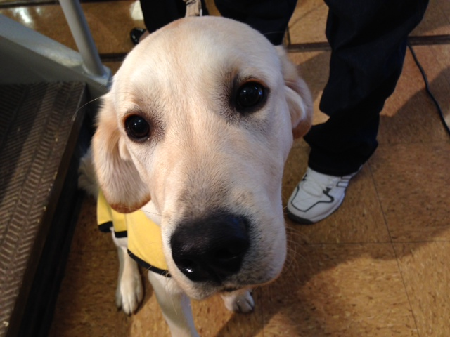 Md. inmates raise service dogs for fellow veterans