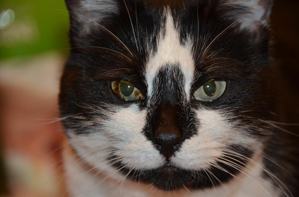 Dark Spot On Iris Of Cat Eye