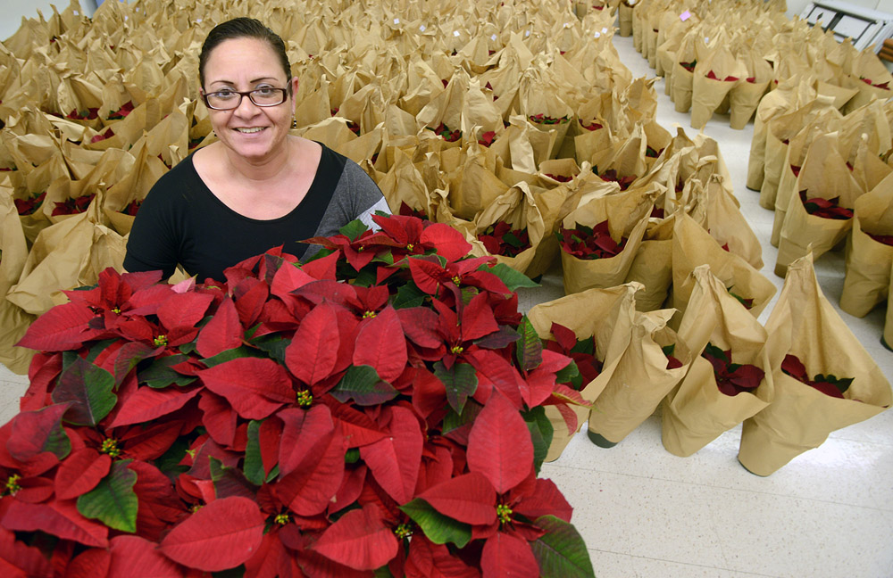 Garden Plot: Tropical plants make a Mid-Atlantic winter bright