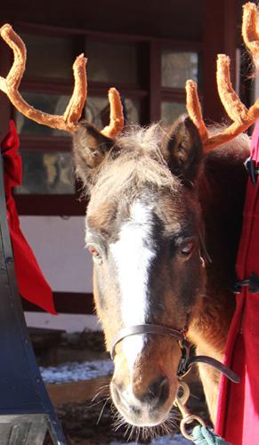 Prancing through a winter wonderland: Riding 'reindeer' in Rock Creek Park