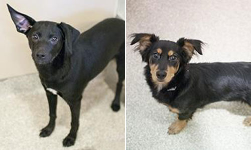 Pet of the Week: Waffles and Plato