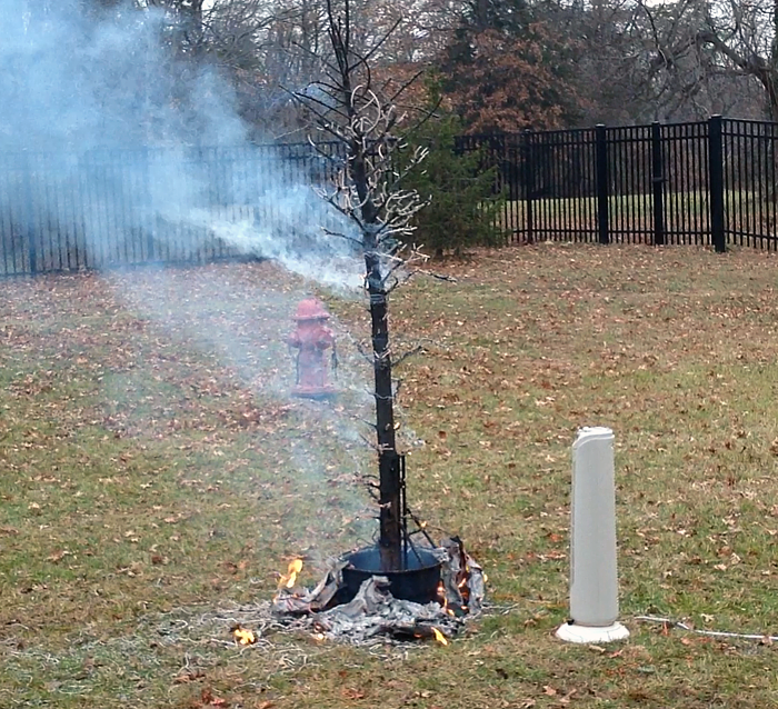 Tips from fire pros on keeping Christmas trees safe
