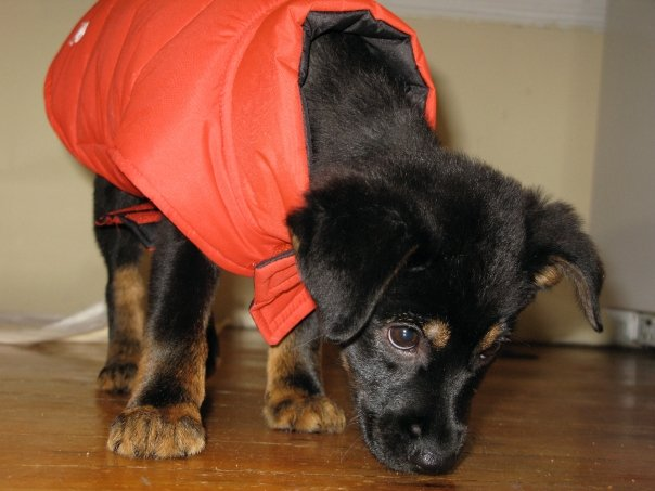 Keep your pet warm, healthy in cold temperatures (Video)