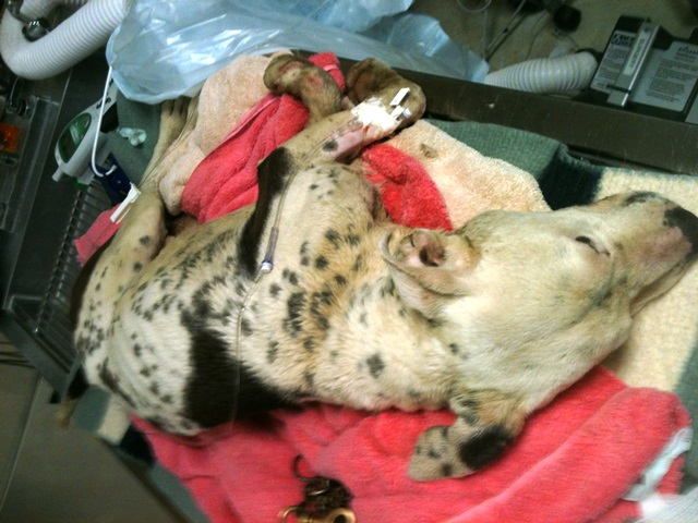 Fairfax County seeks owners of dead dog