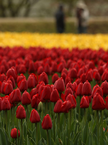 Garden Plot: Yes, you can save those unplanted tulips
