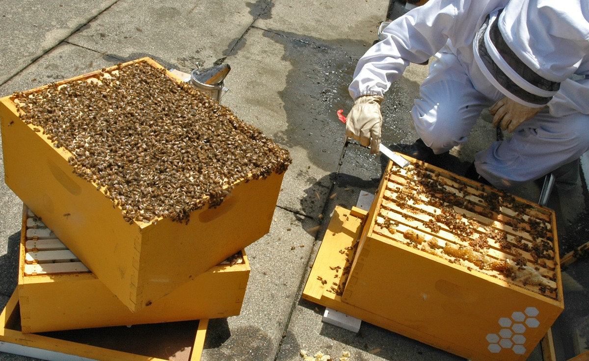 The buzz grows louder: More people turn to beekeeping