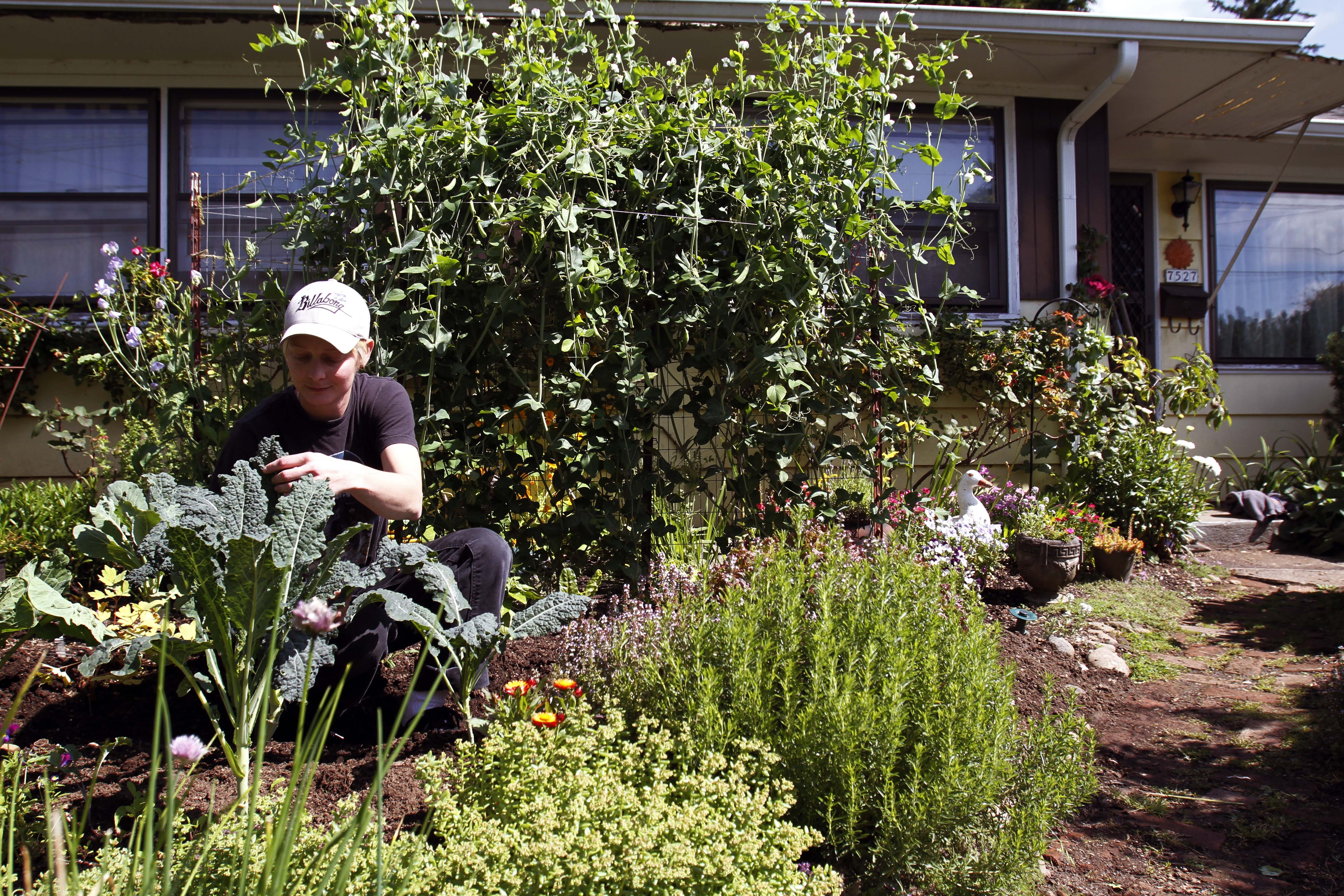 From vegetables to chickens, backyard farming on the rise