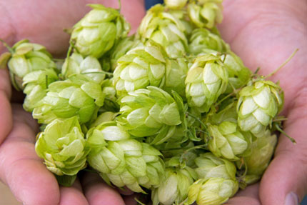 Yes, you can grow your own hops