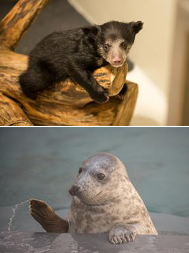 National Zoo names two baby animals