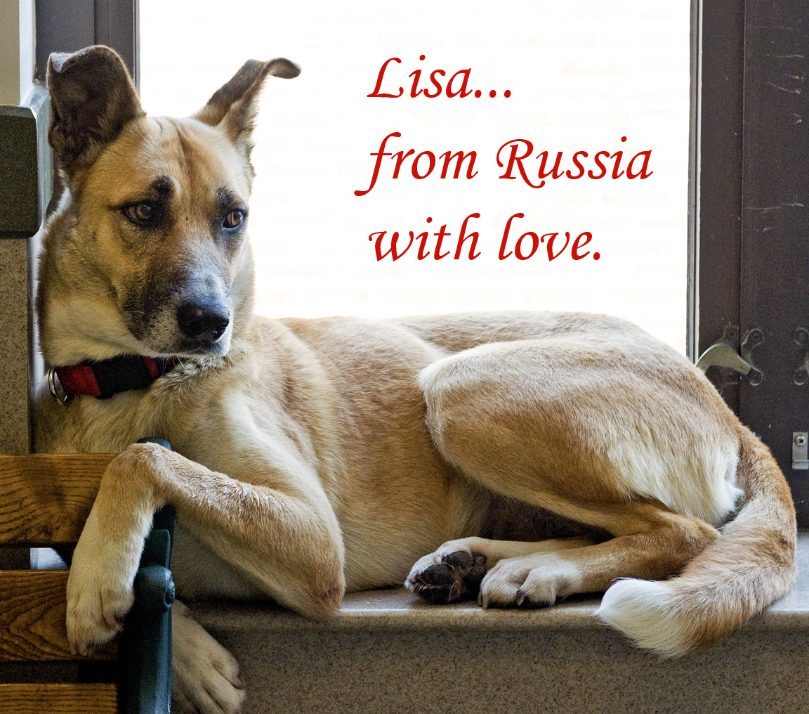 Pet of the Week: Lisa, the last Sochi dog