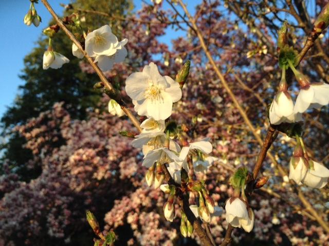 An 'aggressive' allergy season ramps up, pollen count sky high