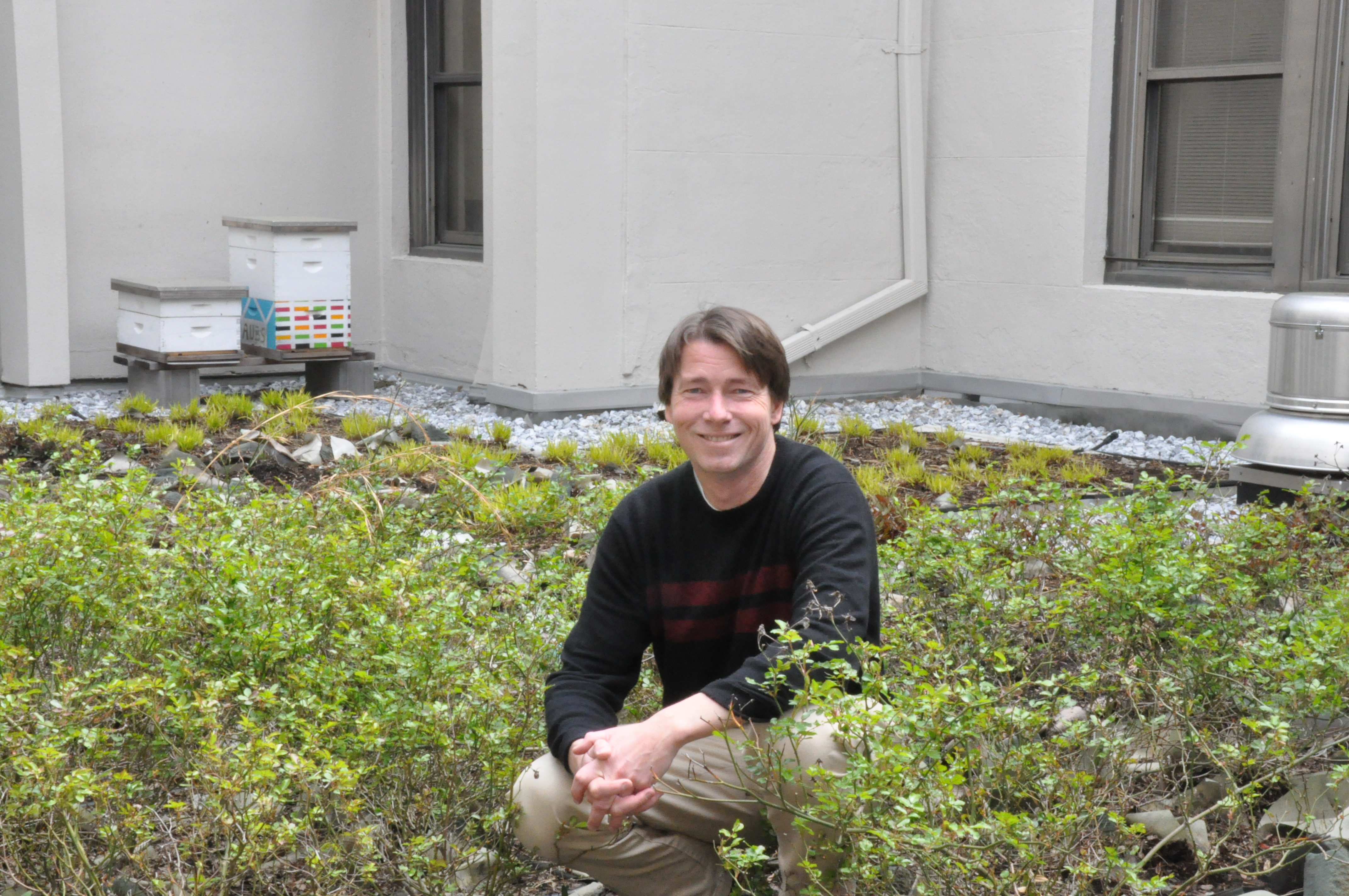 Green roofs could be the answer to clean D.C.'s rivers