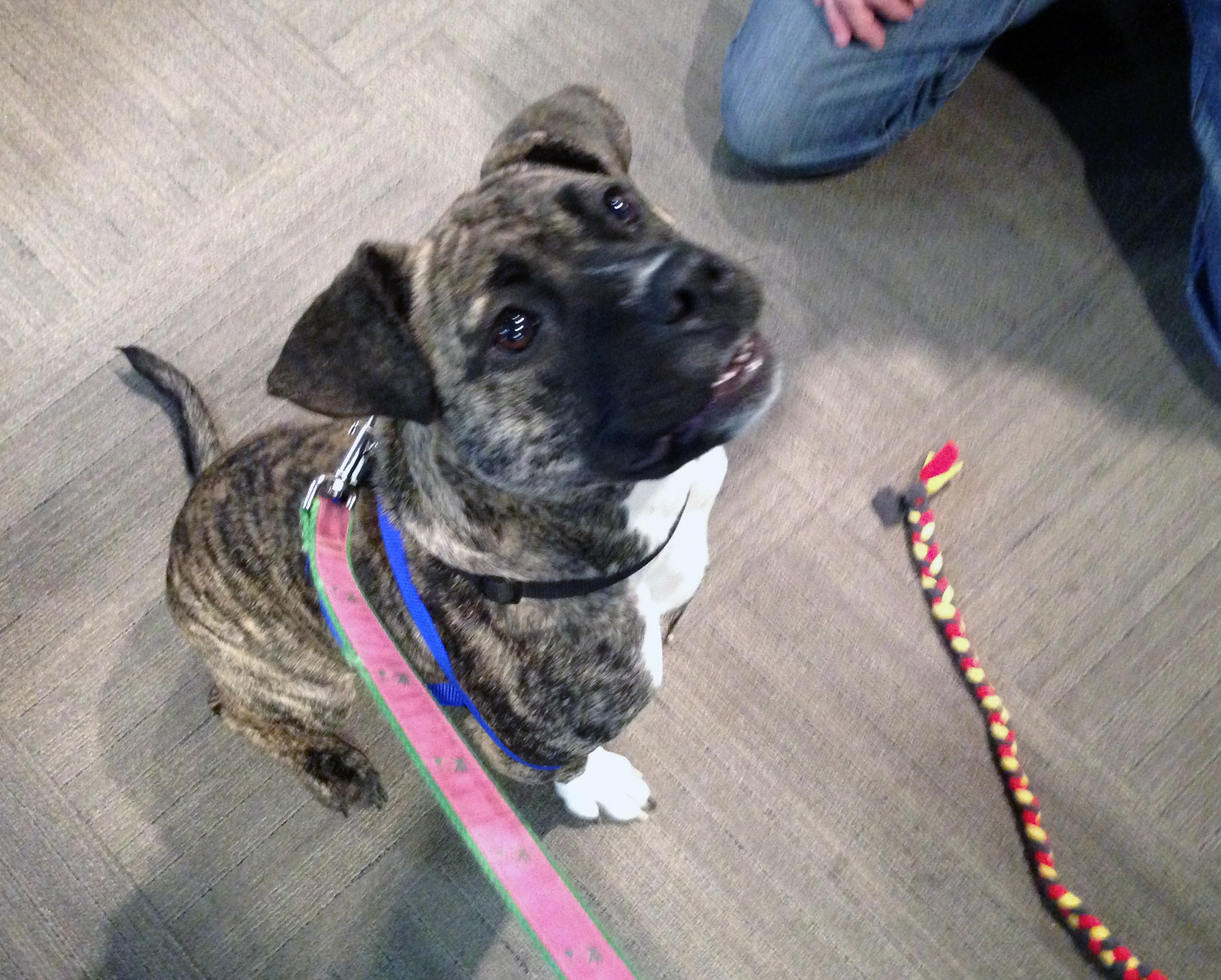 Pet of the week: Ballerina