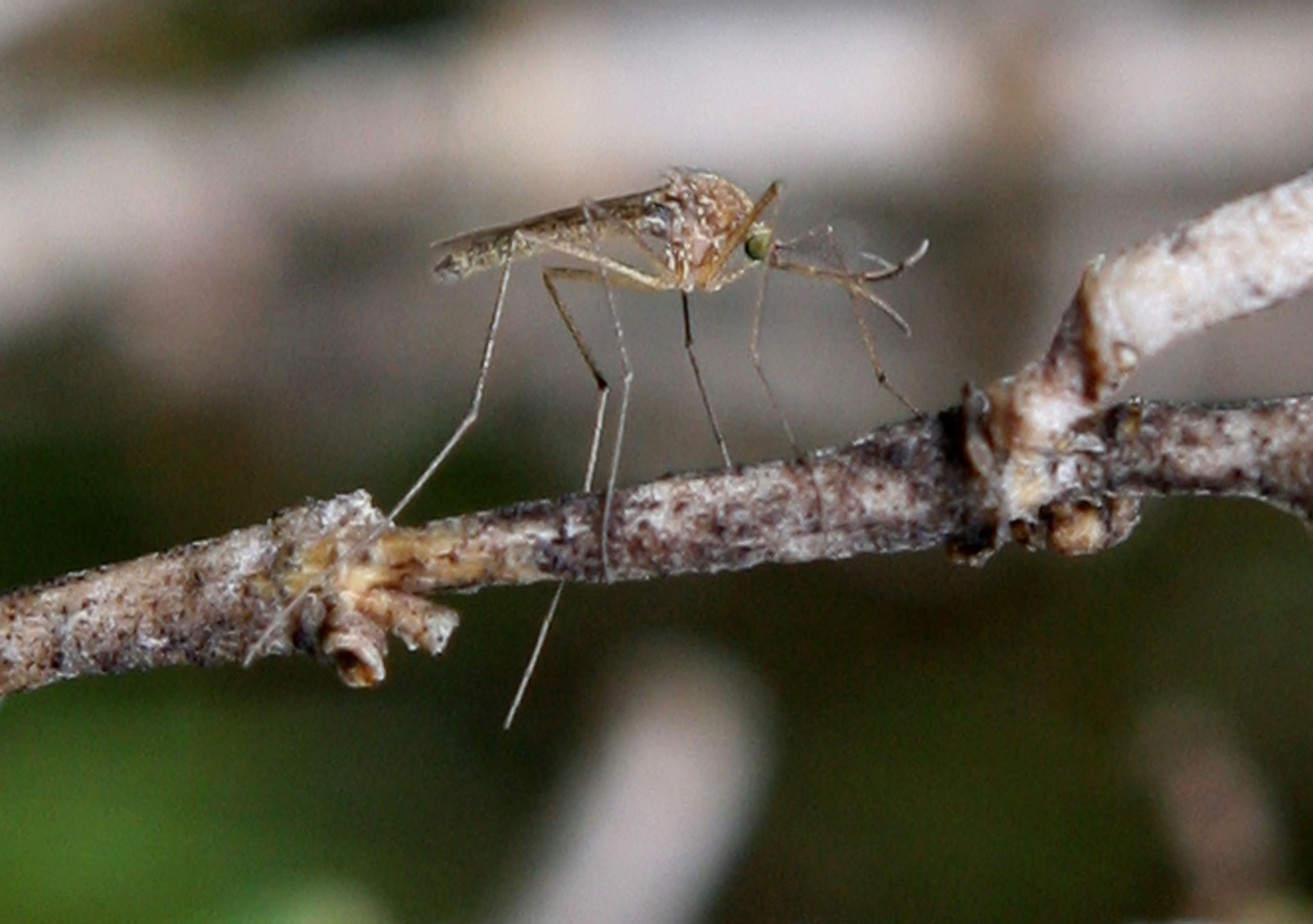 D.C. among cities where you're more likely to get bitten by mosquitoes