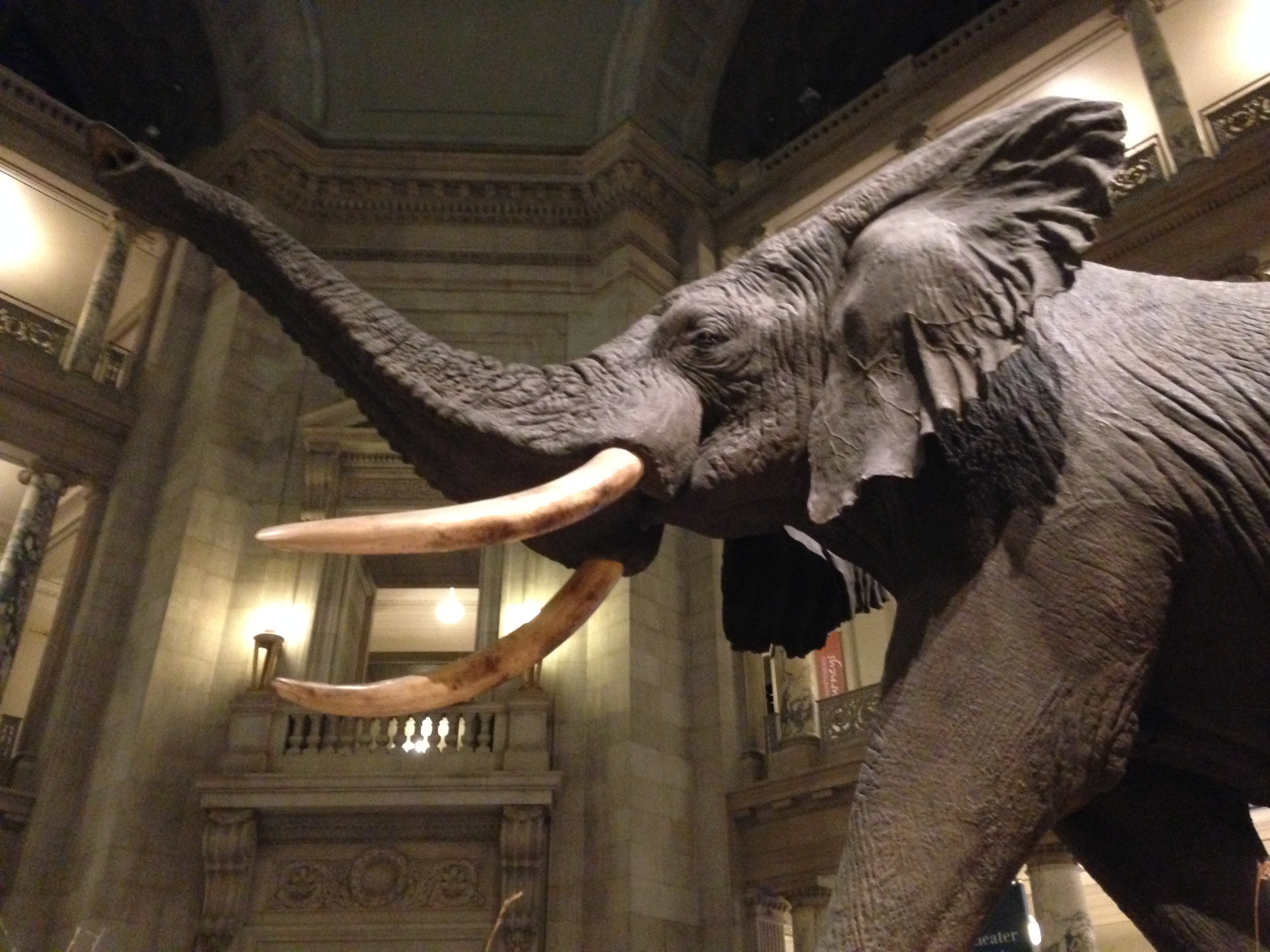 Smithsonian Sleepovers let kids get lost in history