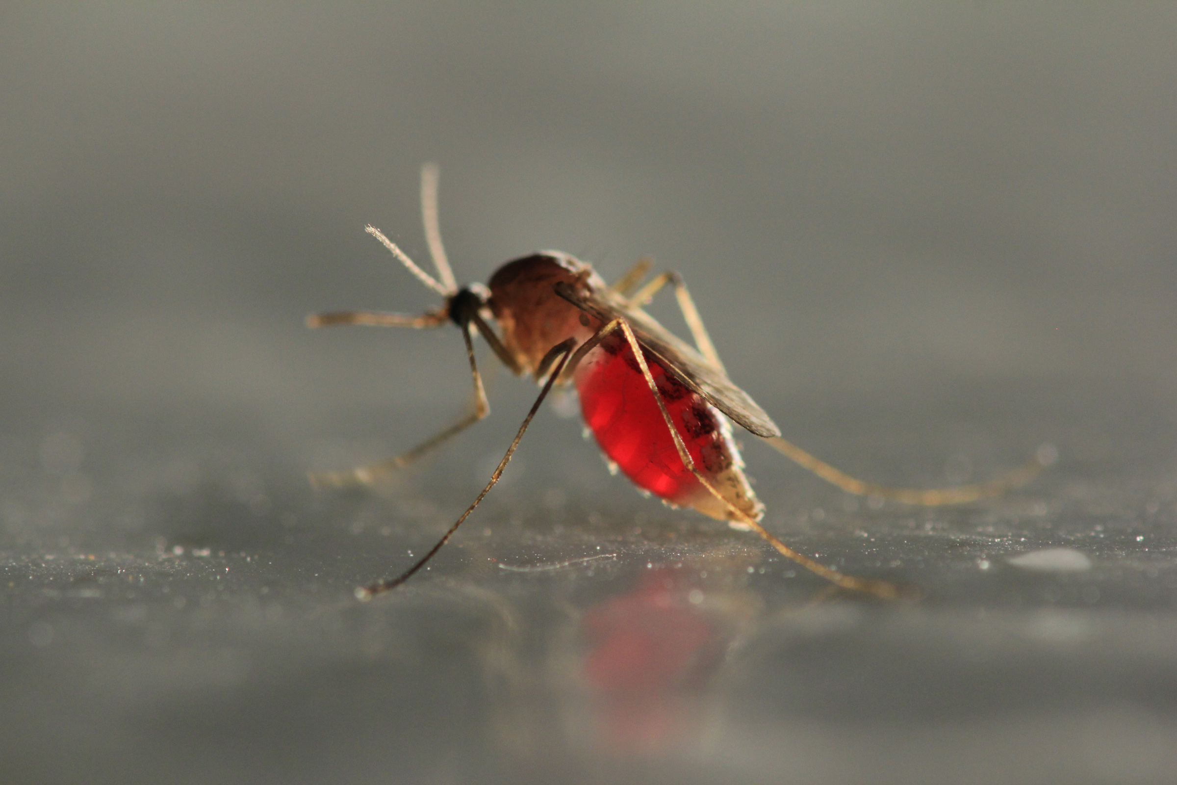 Low-maintenance ways to ward off pesky mosquitoes this summer