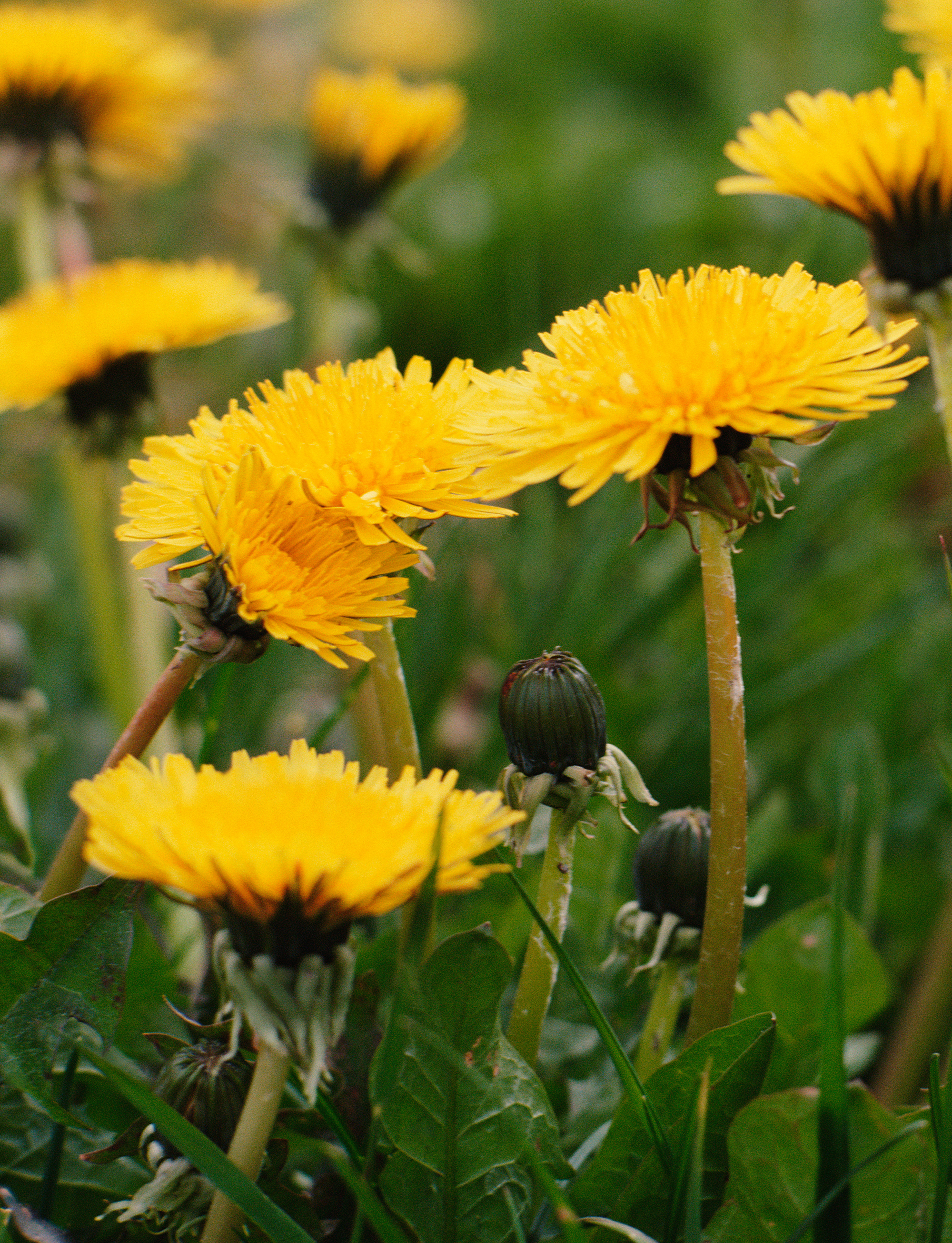 Garden Plot: Follow this non-toxic plan for a better looking lawn