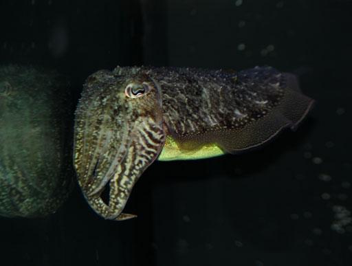 The secret lives of invertebrates (Photos)