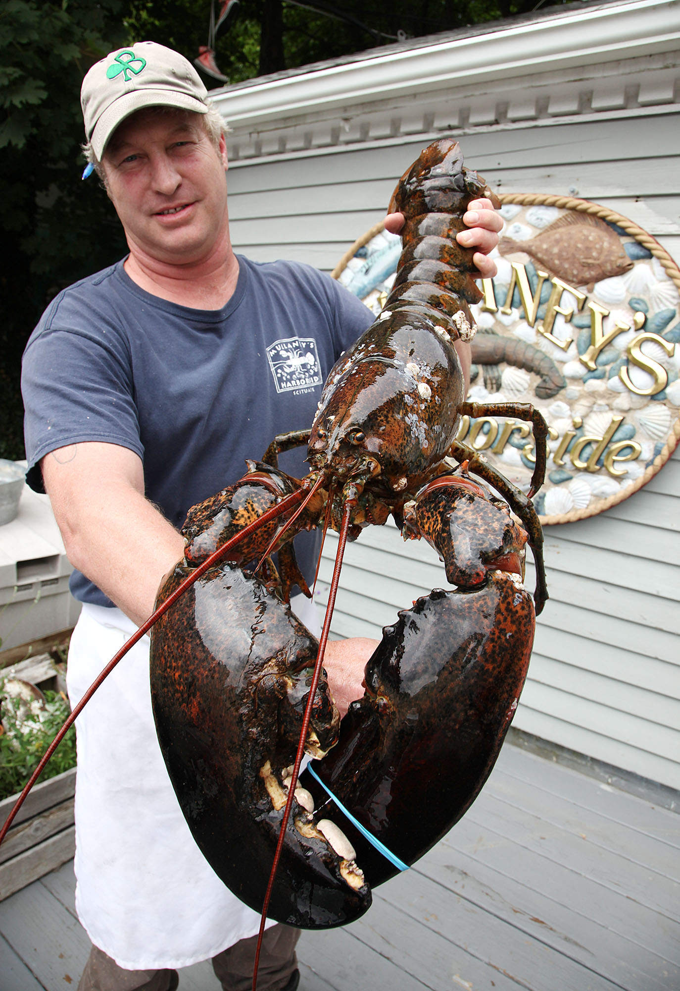 18 Pound Lobster Gets Reprieve Wtop