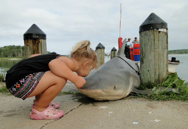 Maryland official: Don't panic over Sandy Point bull shark