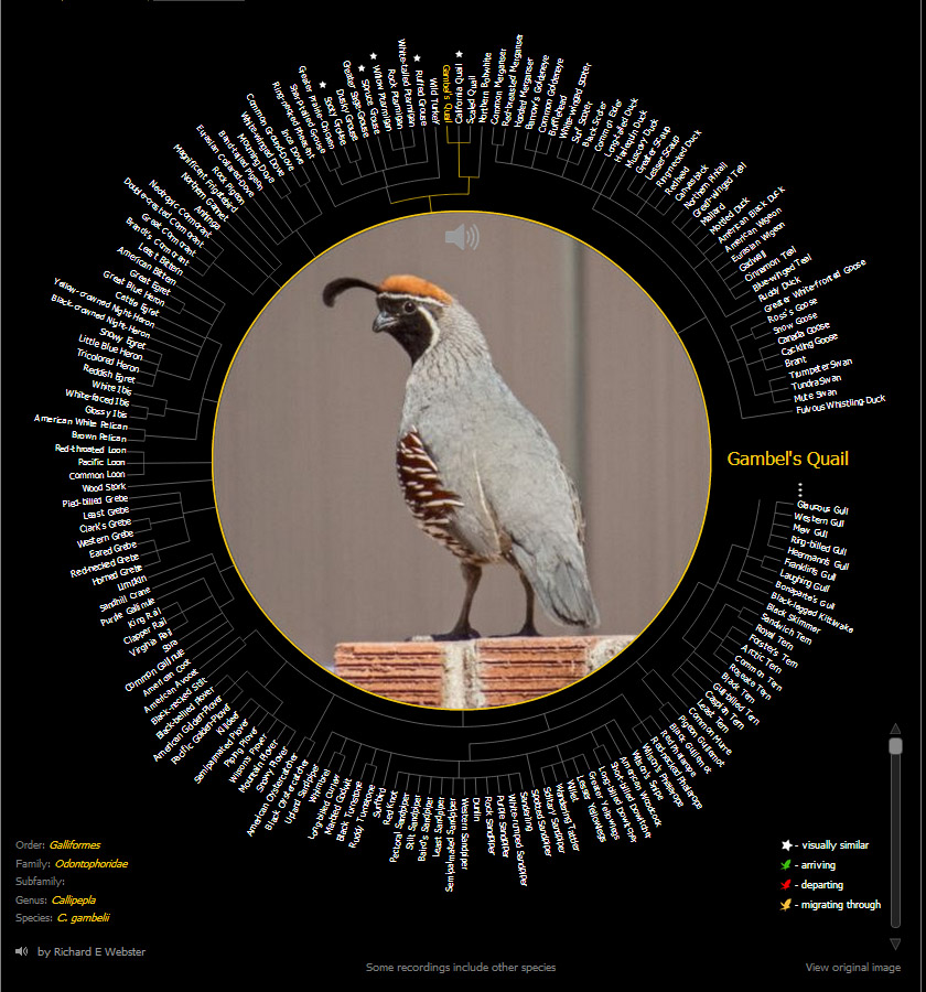 Birdsnap app lets enthusiasts ID birds with mobile photos