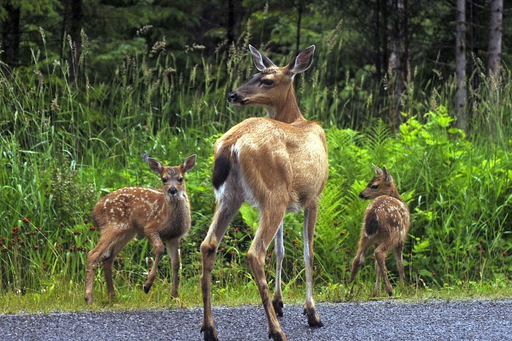 Looking To Put In Some Plants Keep Out Deer There Are A Few Things Consider Ap Photo Klas Stolpe File