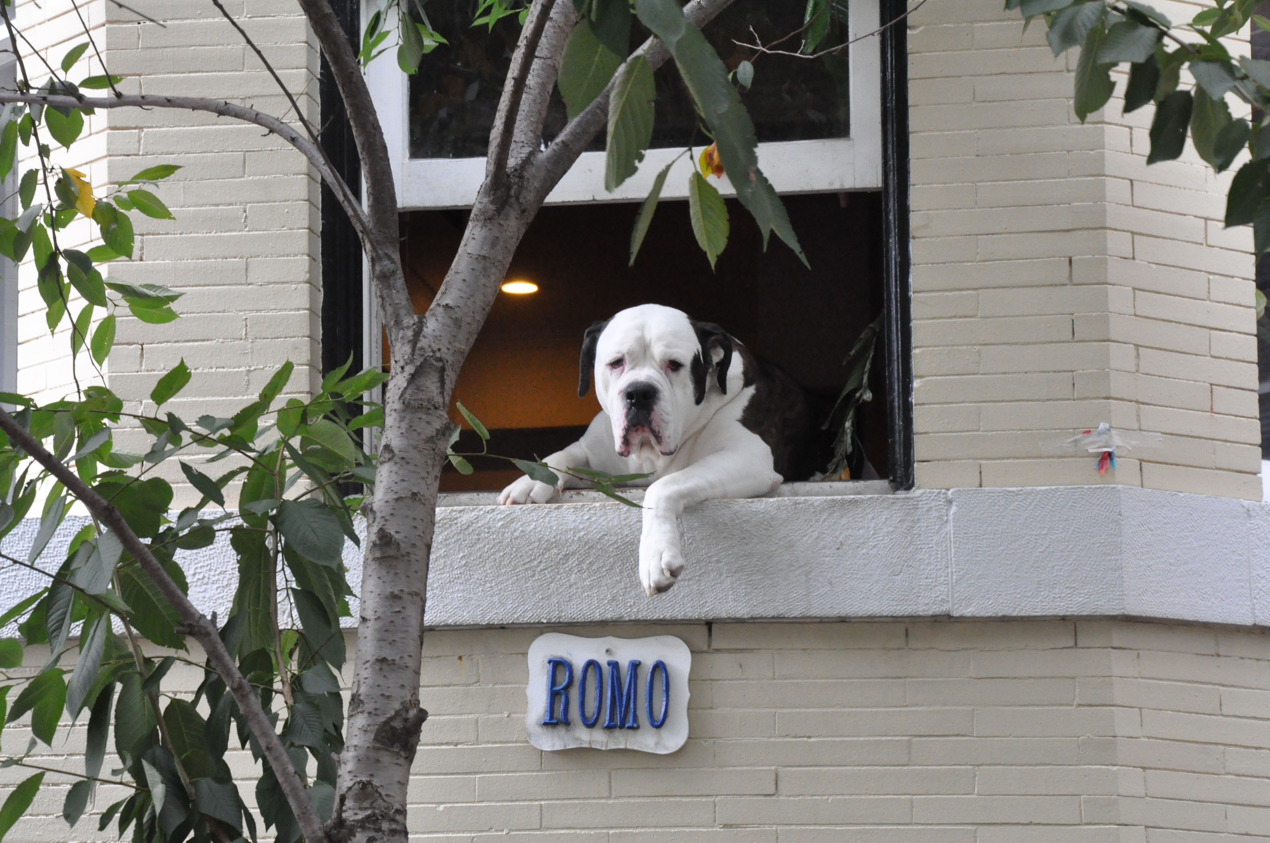 Romo, D.C.'s most famous dog, is moving on