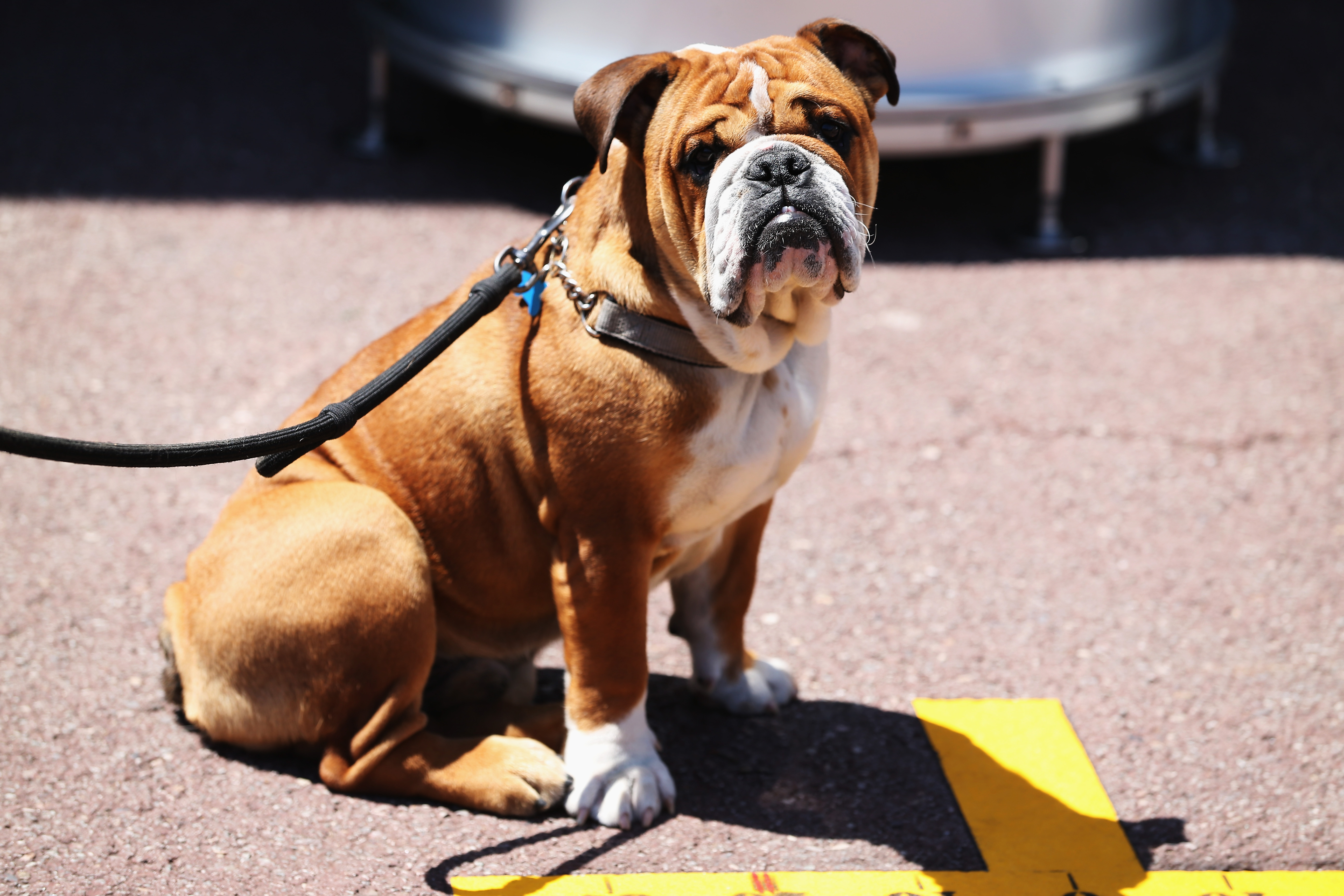 What's the best way to stop your neighbor's barking dog?