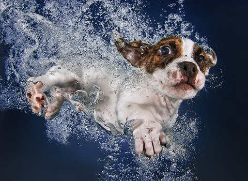'Underwater Puppies' are even cuter than dogs (Photos)