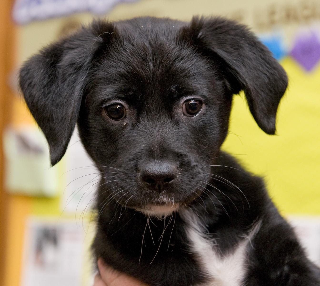 Pet of the Week: Ophelia