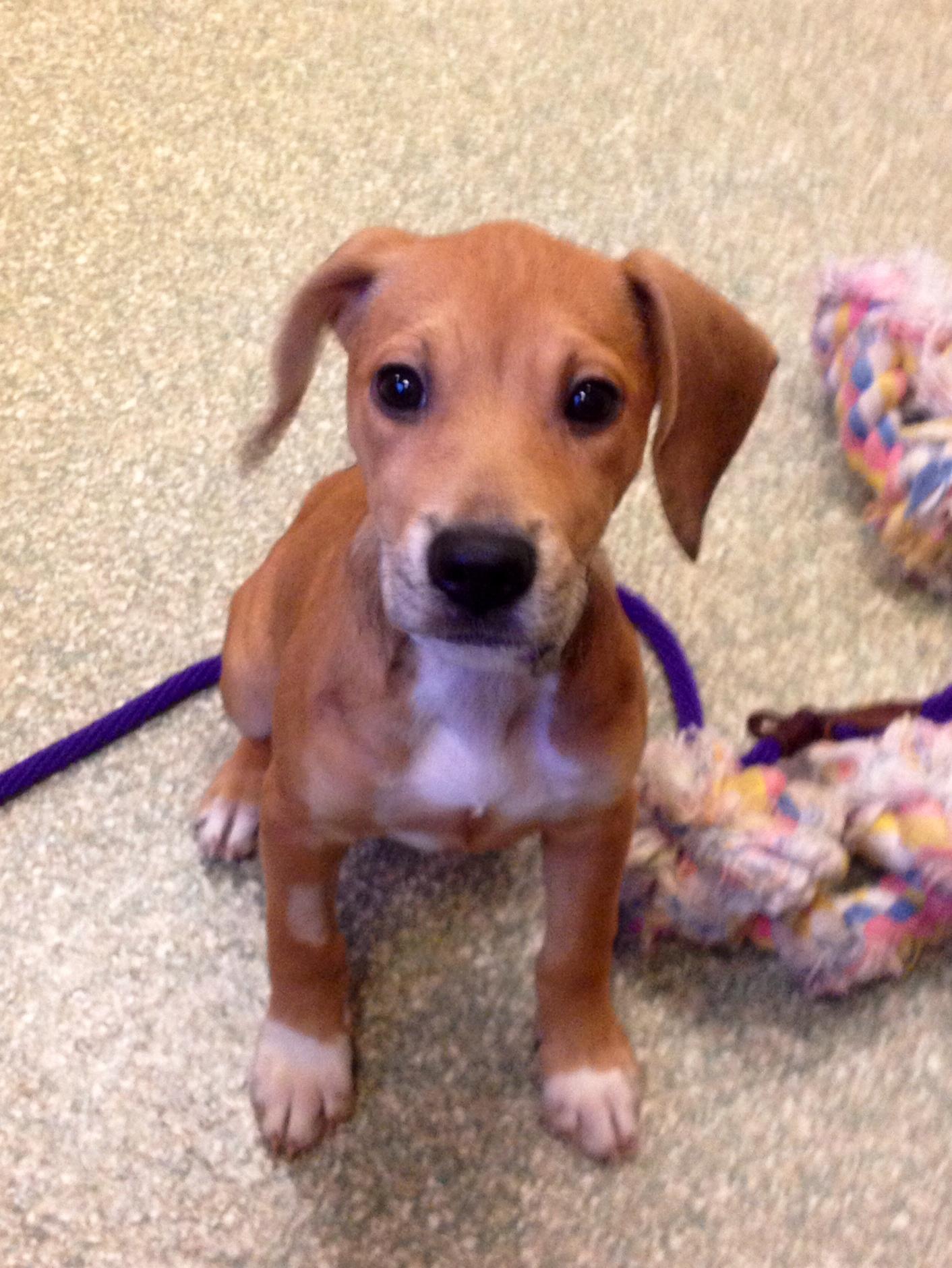 Pet of the Week: Kimmie