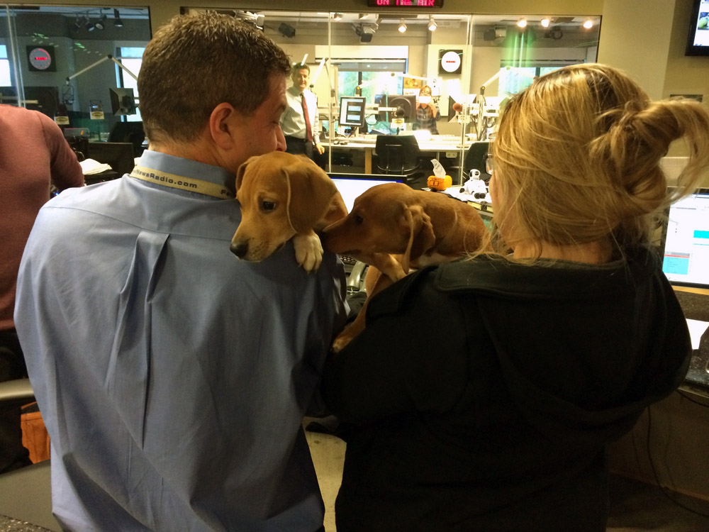 Perfect puppy storm: WARL caring for 25 adoptable pups