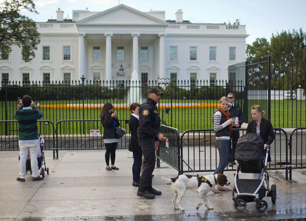 Protection Dog Training Washington Dc