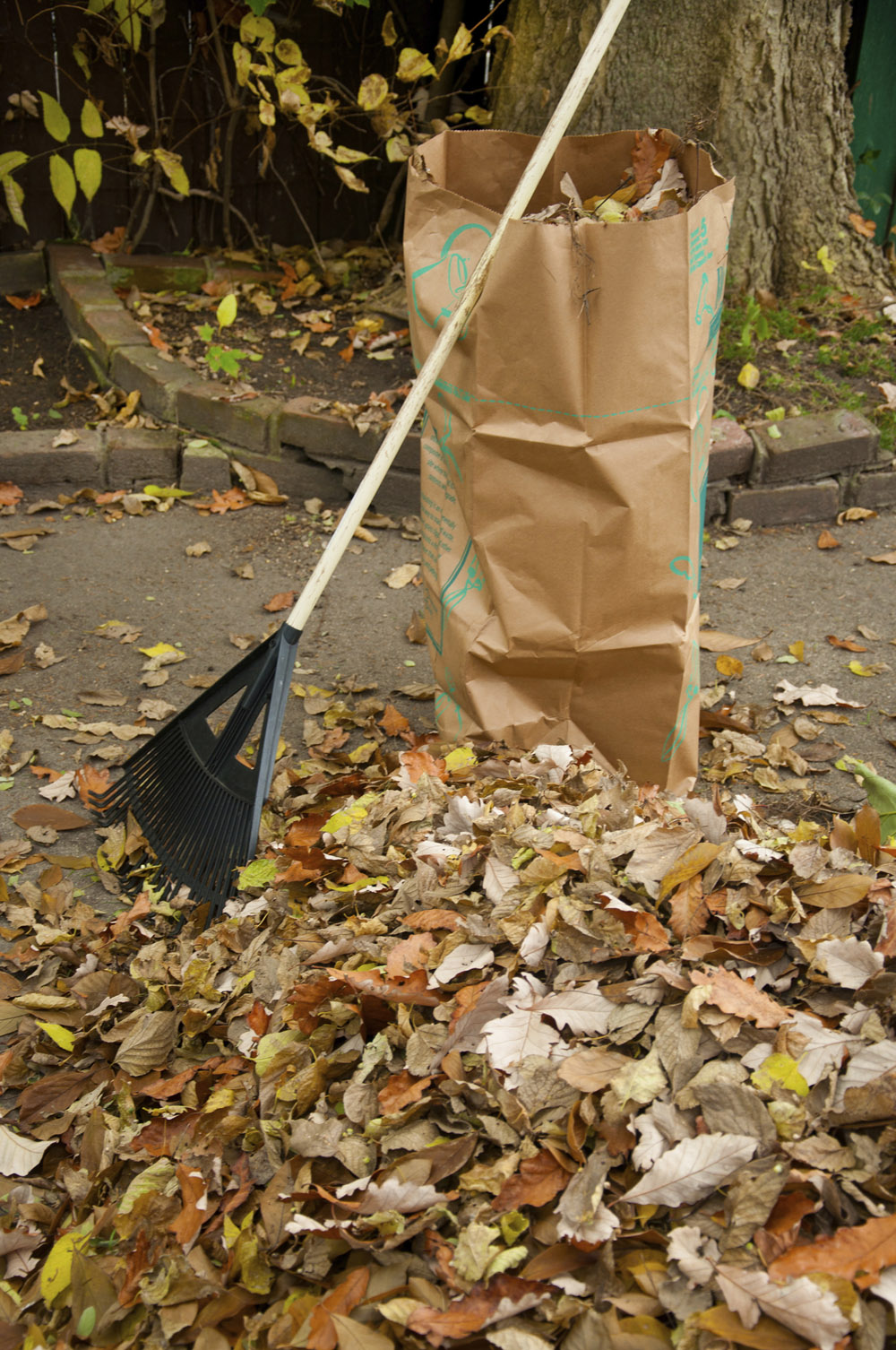 Garden Plot: Tips to shred, store and compost leaves