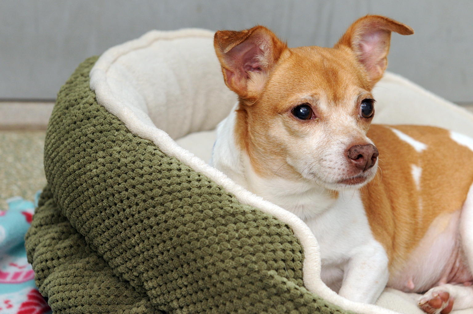 Pet of the Week: Candy