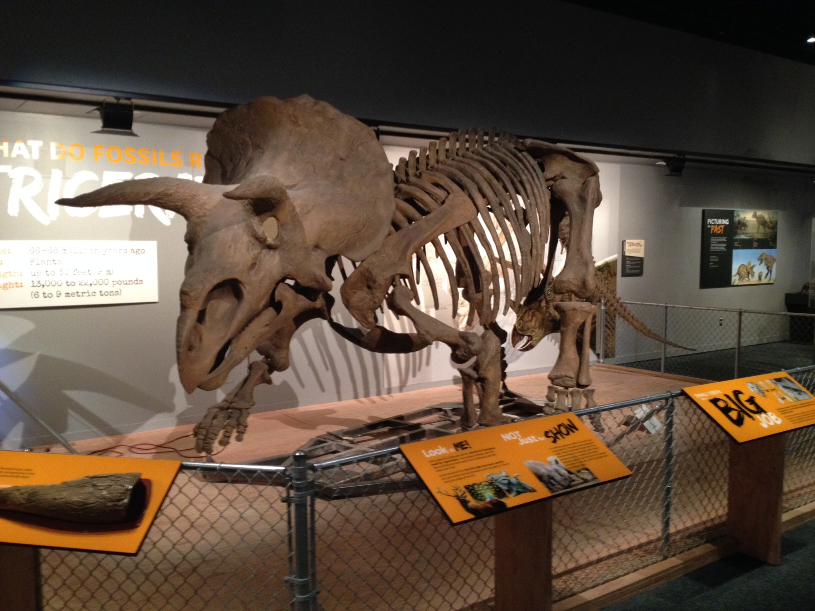 Museum Of Natural History Dinosaur Exhibit