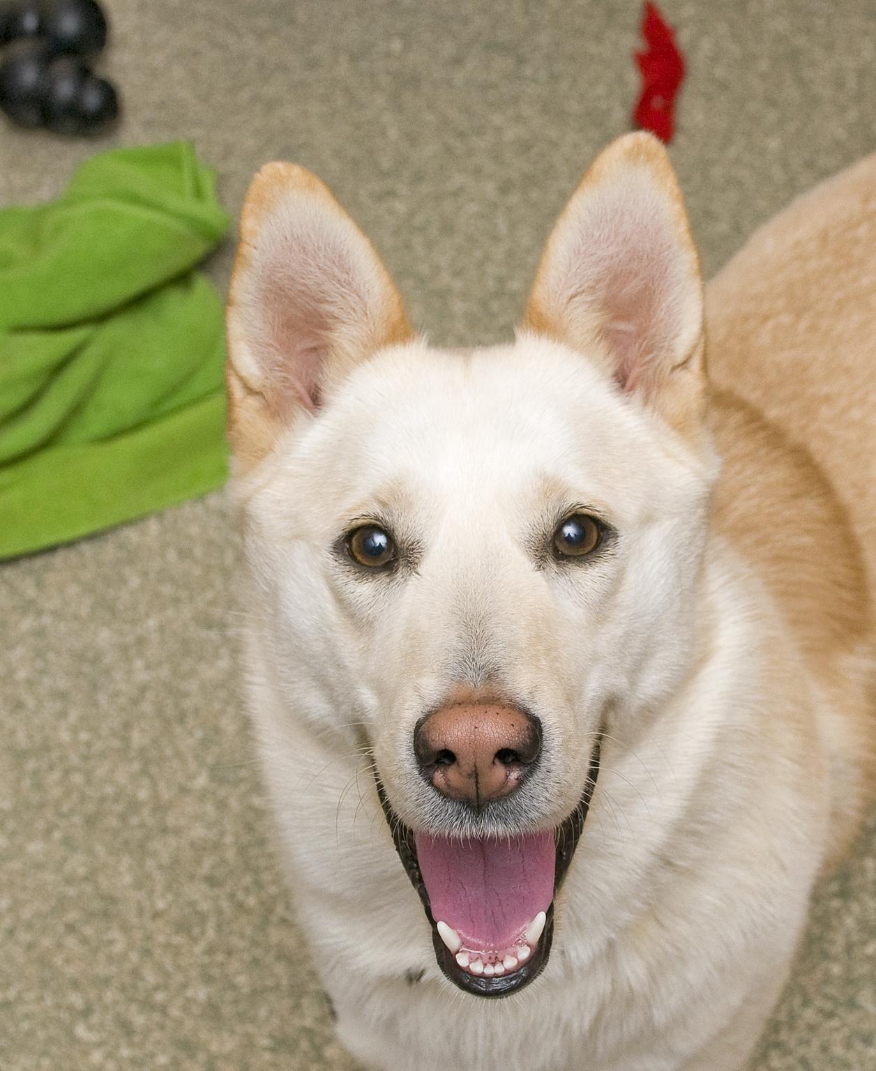 Pet of the Week: Rosie