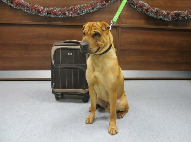 Dog sold online abandoned at Scottish rail station