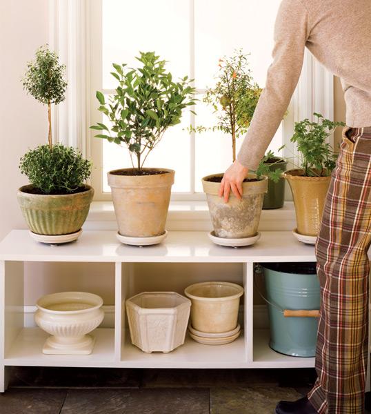 Garden Plot: Hug your houseplants, de-ice your walkway