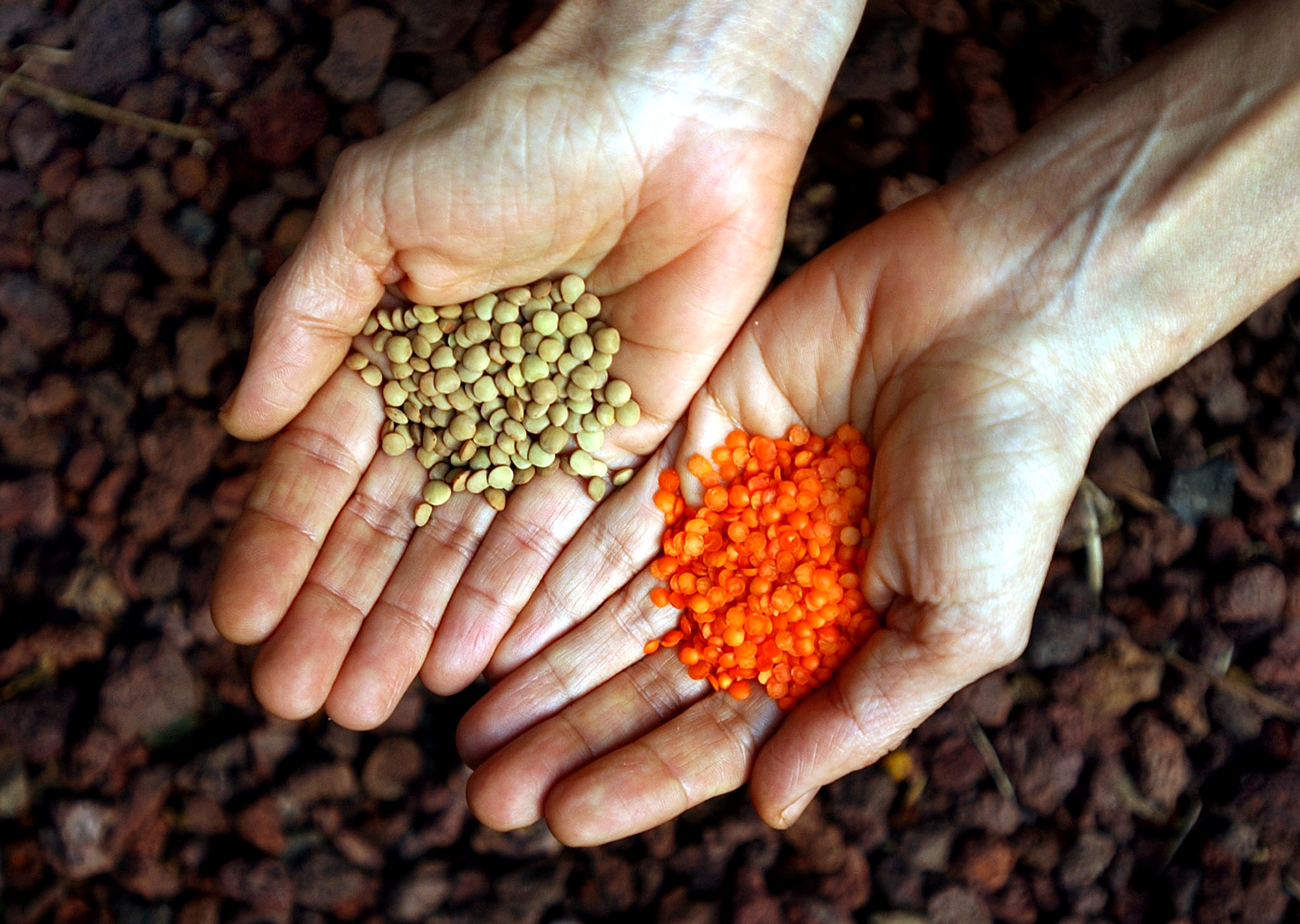 Make it your year to eat more pulses — on Earth Day and beyond