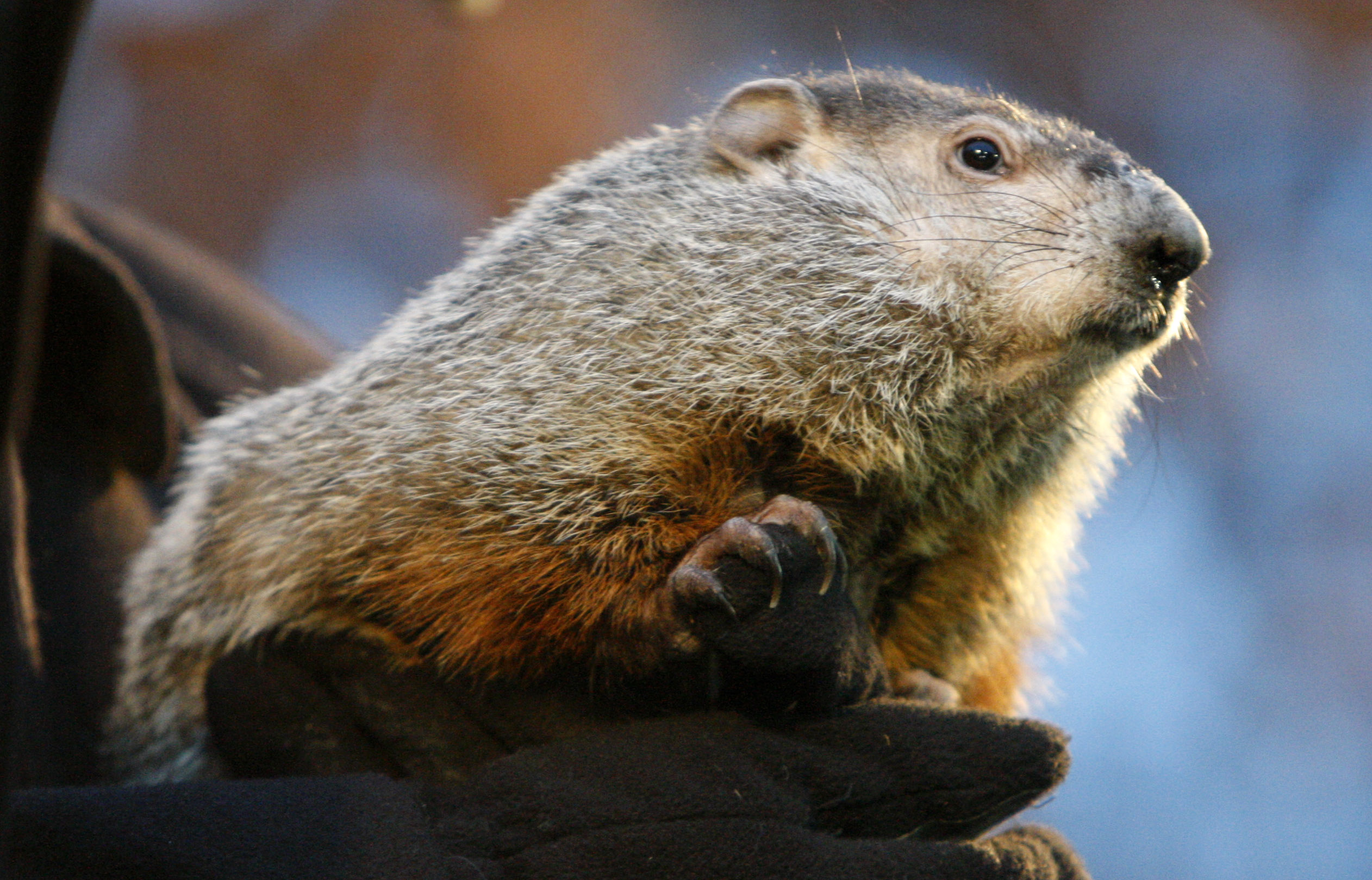 Demystifying a groundhog's prediction
