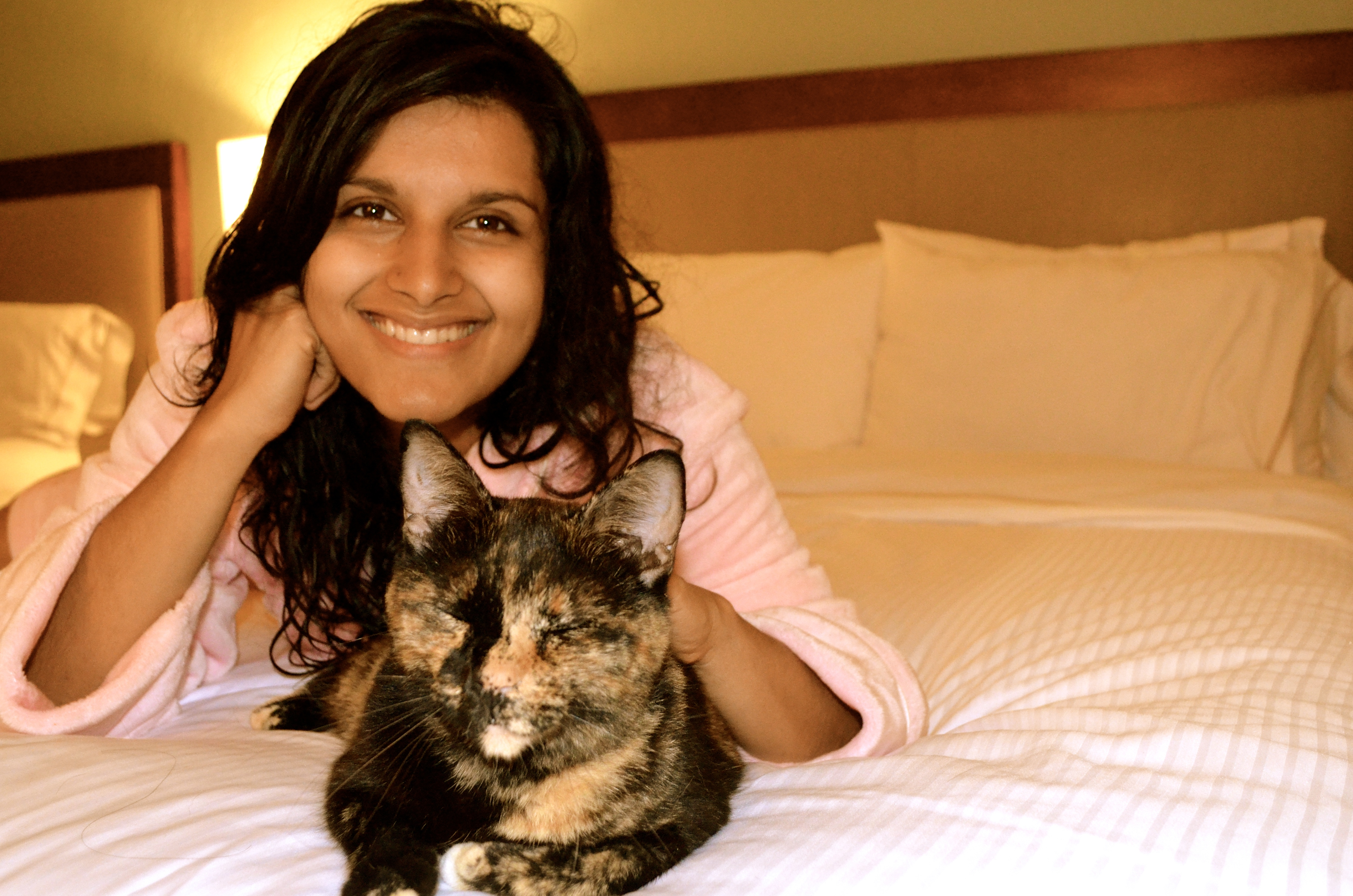 Founder shares plans for D.C.'s first cat café, Crumbs and Whiskers