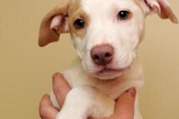 Flacco is this week's WARL Pet of the Week. (Courtesy WARL)